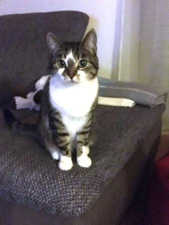 Kitty_HP