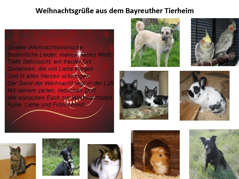 Weihnachtsgrüße aus dem Bayreuther Tierheim
